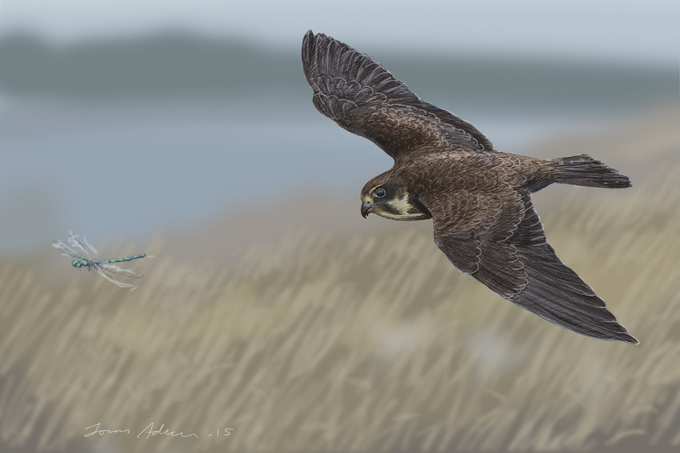 Fågelteckningar